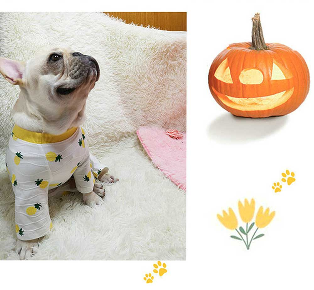 Four-legged Clothes for Small Size Dogs, Casual Dog Clothes Newly-designed for Autumn Winter 2019 Pet Clothes 4