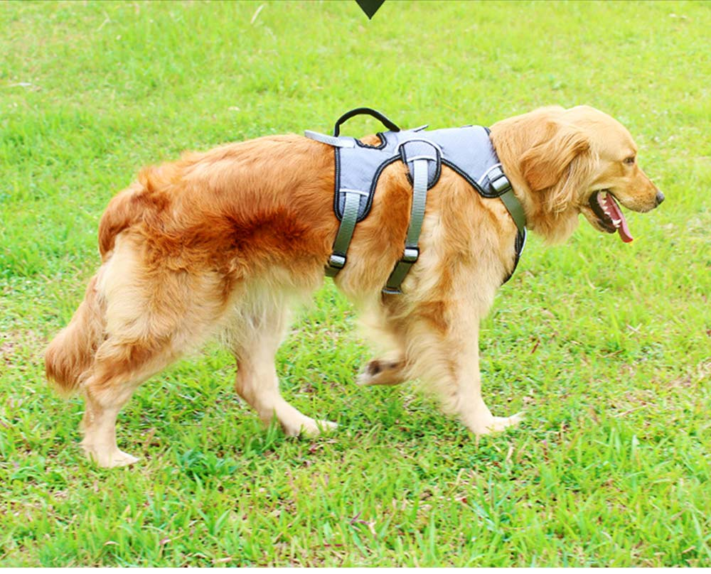 Breech Strap with Double Buckles and Six-point Design, Breathable & Holds Dog's Neck Rope for Medium-sized Large Pet Dog 3