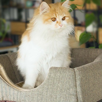 Fine Printing Fabrics Cat Nest, Practical Dual-purpose Deformation Nest, with Soft Cotton Pad